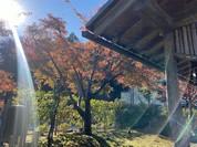 季節を楽しむことのできるお庭がとても素敵でした。